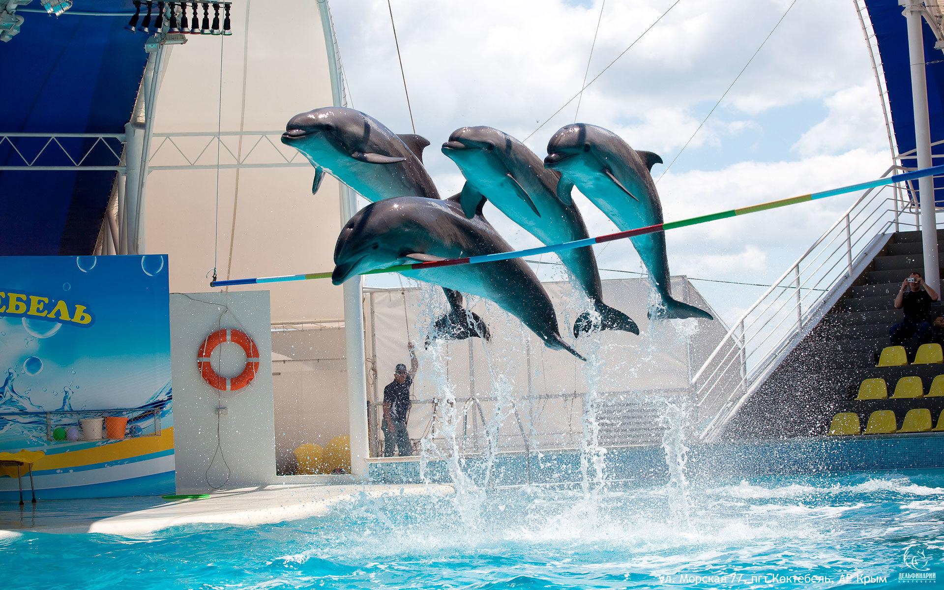 Дельфинарий в Коктебеле (1 фото)