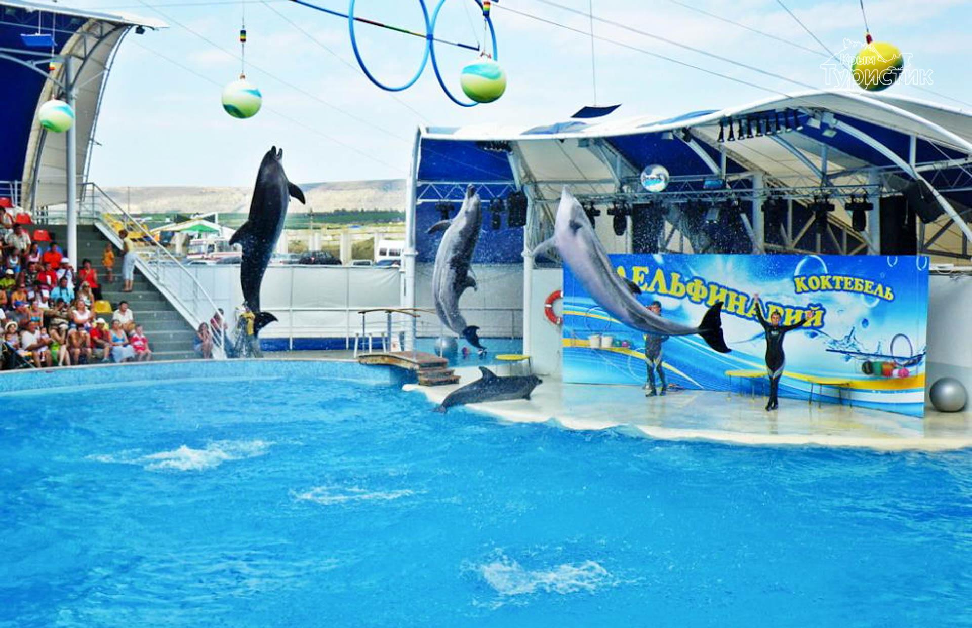 Дельфинарий в Коктебеле (3 фото)