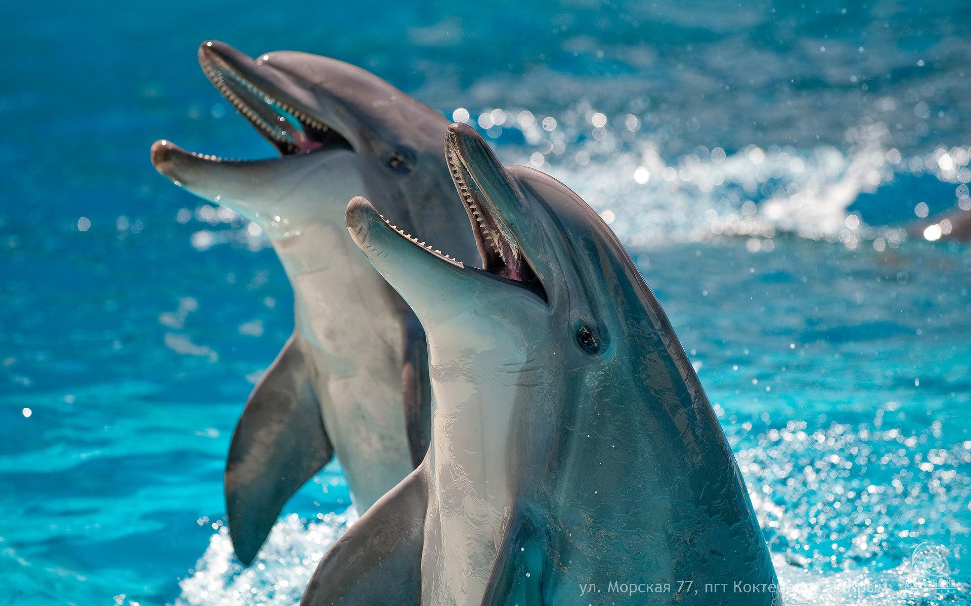 Дельфинарий в Коктебеле (4 фото)