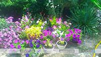 Цветы - Эксклюзивные домики в Орджоникидзе.